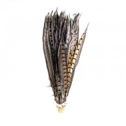 Bażancie pióro naturalne 40cm