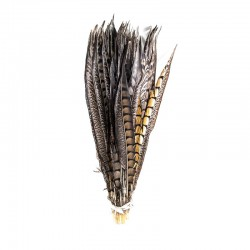 Bażancie pióro naturalne 60cm