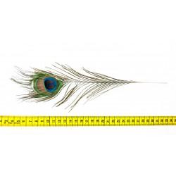 Pawie pióro naturalne 25cm